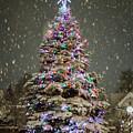 Snow Globe by Rod Best