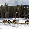 Snow Horses by Toula Mavridou-Messer