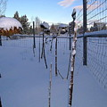 Snow In Bend Oregon  by Christopher Allison