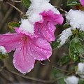 Snow In Houston by Brigitta Diaz