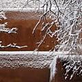 Snow In Santa Fe New Mexico by Elizabeth Rose
