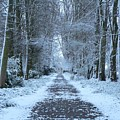 Snow In The Avenue by Lynne Iddon