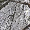 Snow In Yosemite by Karen Jensen
