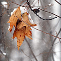 Snow Leaves by Lila Fisher-Wenzel