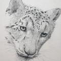 Snow Leopard - Intent by Alan Pickersgill
