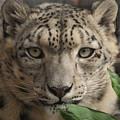 Snow Leopard 13 by Ernie Echols
