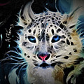 Snow Leopard by Alex Thomas