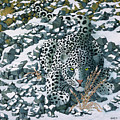 Snow Leopard by Ken Church