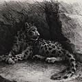 Snow Leopard by Rachel Christine Nowicki