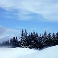 Snow Light by JoAnn SkyWatcher