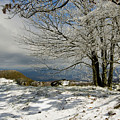 Snow On Beech Mountain  by Gregory Colvin