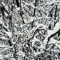 Snow On Branches by Ric Bascobert