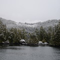 Snow On Cedars by Bobbi Mercouri
