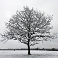 Snow On Epsom Downs Surrey Uk by Julia Gavin