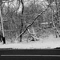 Snow On Fallen Tree by Rob Hans