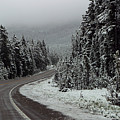 Snow On Road Through Forest by Linda Phelps