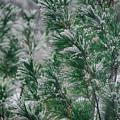 Snow On The Pine by John Diebolt