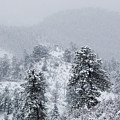 Snow On The Ridge In The Pike National Forest by Steve Krull