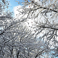 Snow On Trees by Tamar Mirianashvili