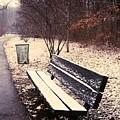 Snow Park Bench by Carmine Taverna
