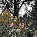Snow Pea by Douglas Craig