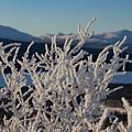 Snow Scene 5 by Phyllis Spoor