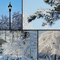 Snow Scenes Of Charleston Sc by Donna Bentley