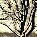 Snow Sitting On Top The Tree by Marsha Heiken