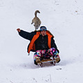 Snow Sports That Can Be Done With Your Dog by Cary Leppert