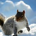 Snow Squirrel by Bob Cuthbert