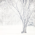 Snow Storm by Sylvia Coomes