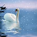 Snow Swan Swim by Jessica Jenney