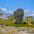 Snow-topped Mountains From Tahquitz Canyon Way In Palm Springs-california  by Ruth Hager