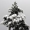 Snow Tree by Leone Lund