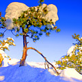 Snow Tree by Scott Mahon