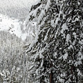 Snow, Trees, Yellowstone by Michael Riley