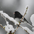 Snow Watcher by Lori Tambakis