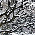 Snowfall And Tree by Elena Elisseeva