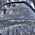 Snowfall Covers Northern Arizona For Christmas by Thomas Todd