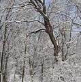Snowfall by David Bearden