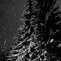 Snowfall by Henrik Kuosa