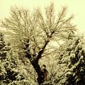 Snowfall by Ilaria Andreucci