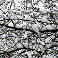 Snowfall On Branches by Deborah  Crew-Johnson
