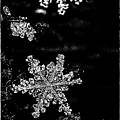 Snowflake Jewels by Shelly Gunderson