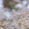 Snowflakes by Sharon Talson