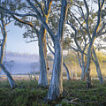 Snowgums At Navarre Plains, South Of Lake St Clair. by Rob Blakers
