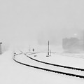 Snowstorm In The Yard Bw by Tim Richards