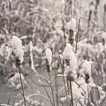 Snowtails by Fred Lassmann