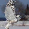 Snowy Angel by Mircea Costina Photography
