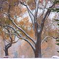Snowy Autumn Landscape by James BO  Insogna